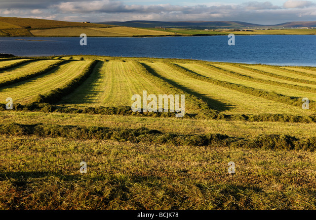 The Ring Of Brodgar Is Located Near What Town