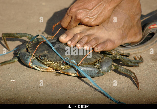 Fisk Stock Photos & Fisk Stock Images - Alamy