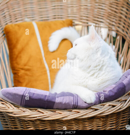 White Muzzle Stock Photos Amp White Muzzle Stock Images Alamy