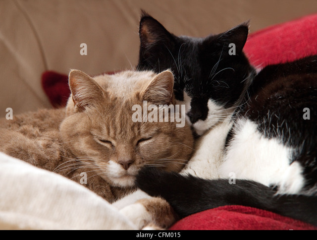 Domestic Cats Stock Ptos