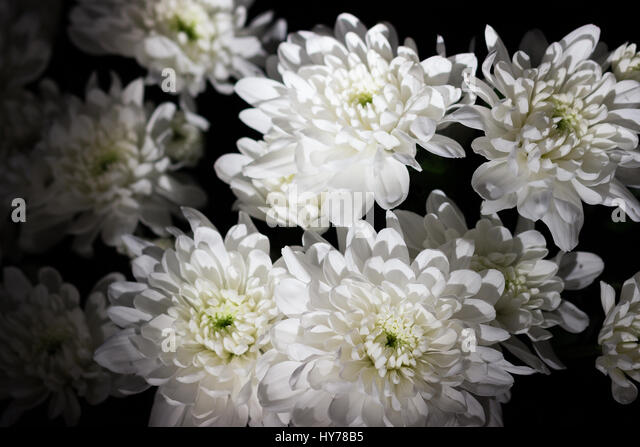 chrysanthemum bouquet stock photos  chrysanthemum bouquet stock, Beautiful flower