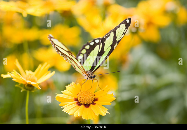 butterfly on yellow color - photo #11