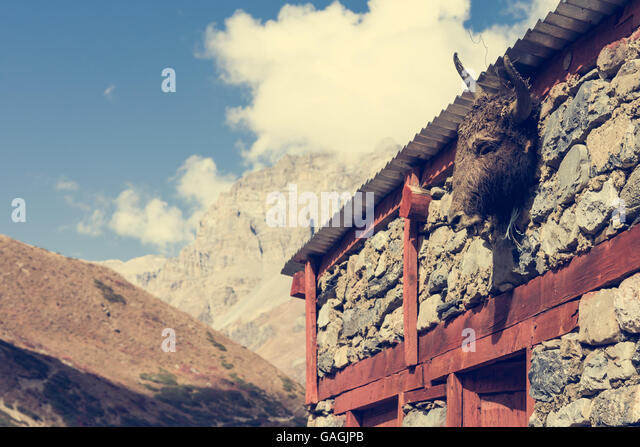 [Image: yak-head-on-a-building-gagjpb.jpg]
