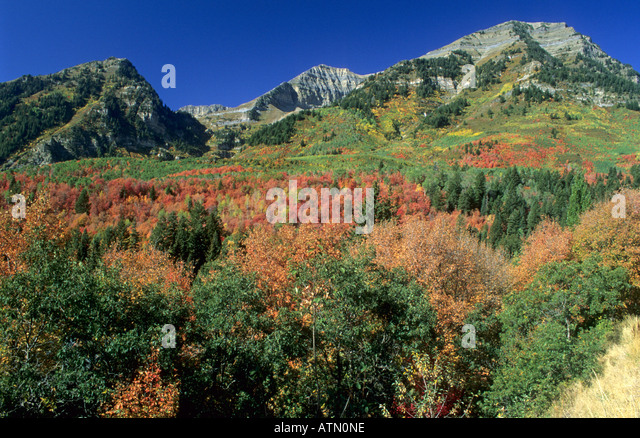 maple mount hindu personals How green mountain is your love a vermont compatibility quiz will they point to a mature sugar maple and an early morning hike up mount philo followed by an.