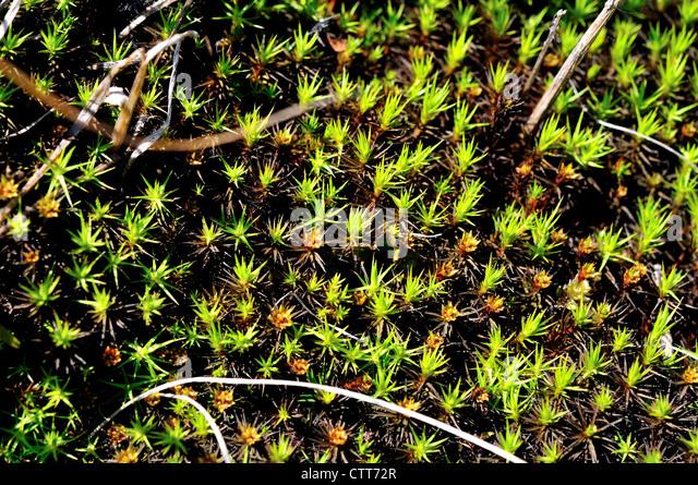 arctic moss stock photos amp arctic moss stock images alamy