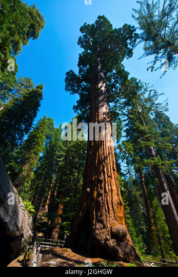 sequoia national park divorced singles This pass is valid for 1-7 days and includes everyone traveling in a single vehicle  for sequoia & kings canyon national parks and hume lake.