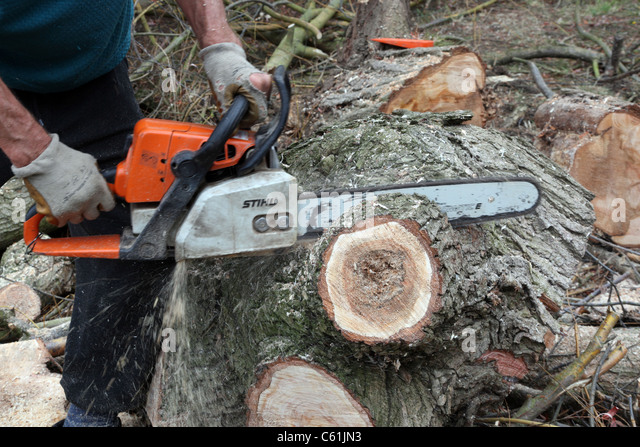 how to cut a fallen tree without a chainsaw