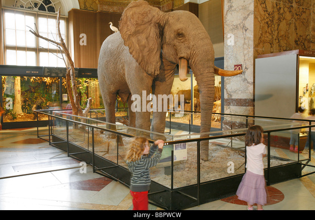 Central Africa Museum Brussels Stock Photos & Central ...