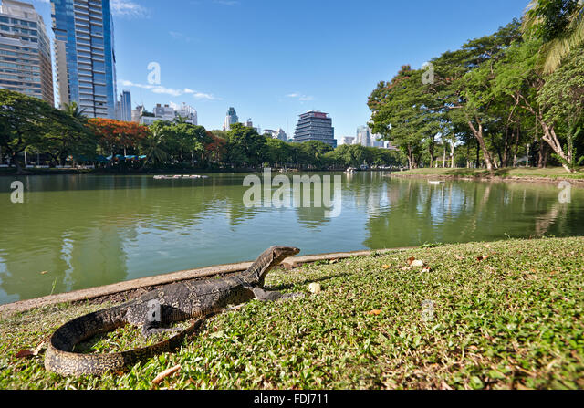 Monitor Lizard Thailand Stock Photos & Monitor Lizard Thailand Stock Imag...