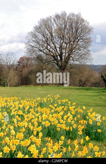 England country garden sussex stock photos england for Garden trees england