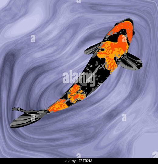 Koi aquarium stock photos koi aquarium stock images alamy for Orange and black koi