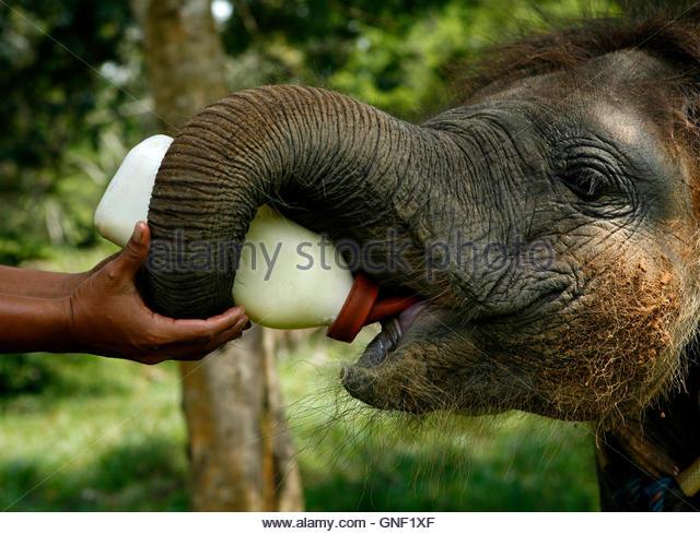 how to become an elephant keeper