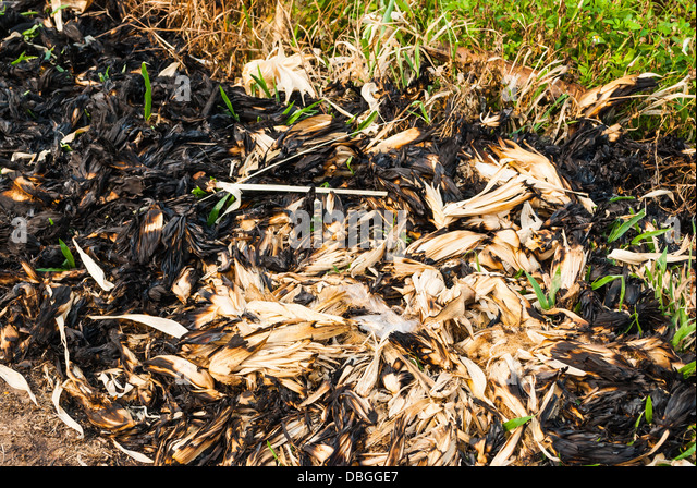 how to fix burnt grass