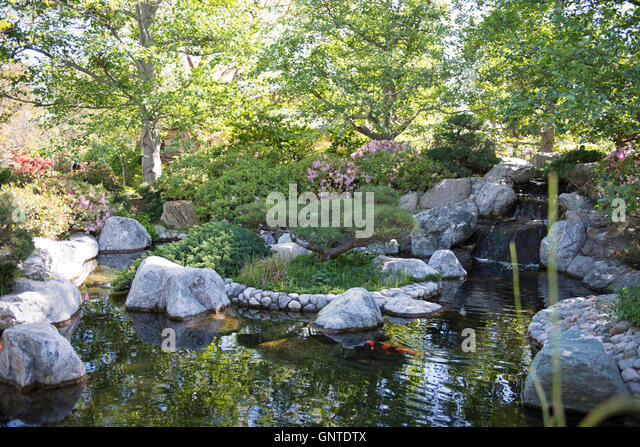 Koi pond stock photos koi pond stock images alamy for Japanese garden san jose koi fish
