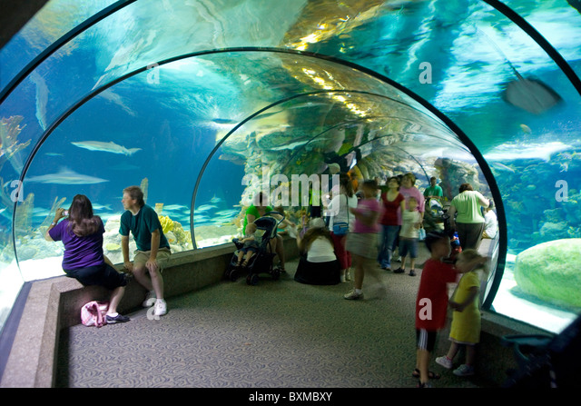 Henry doorly zoo and aquarium the best tourist place in the world henry doorly zoo stock photos henry doorly zoo stock images alamy omahas henry doorly zoo and aquarium publicscrutiny Image collections