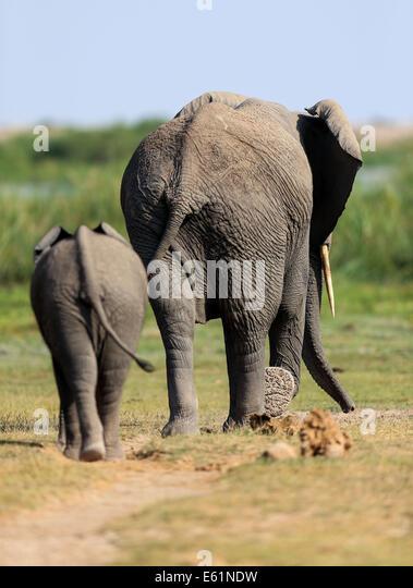 human elephant conflict stock photos human elephant conflict stock images alamy. Black Bedroom Furniture Sets. Home Design Ideas