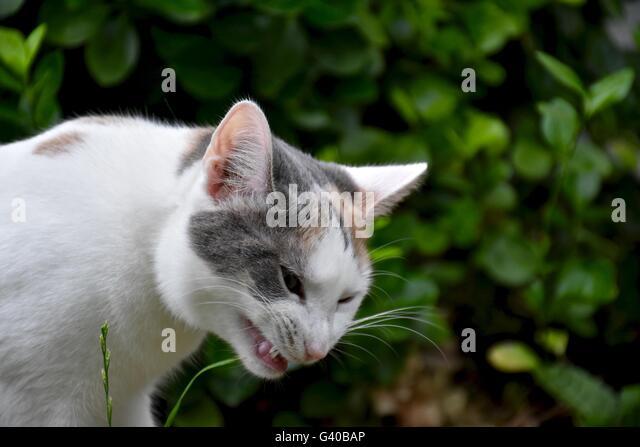 Long Hair Calico Cat Stock Photos & Long Hair Calico Cat ...