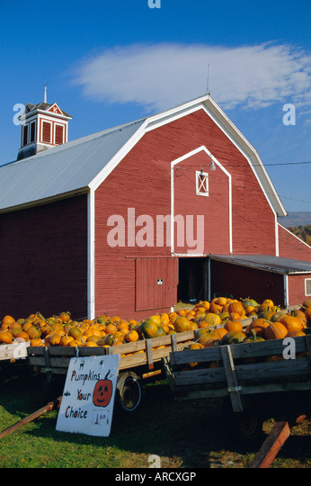 Pumpkins for sale sign stock photos pumpkins for sale for New england barns for sale