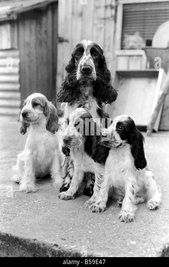 Dog Kennels Hildenborough