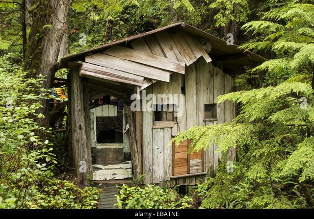 a cabin at cougar annies garden hesquiat peninsula vancouver island bc canada