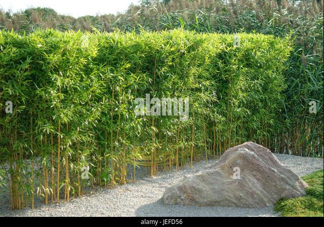 Bambus Hecke bambus hecke stock photos bambus hecke stock images alamy