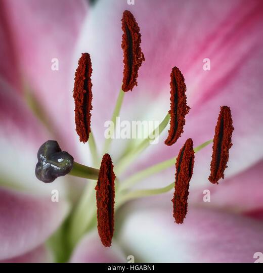 Nik Stock Photos Amp Nik Stock Images Alamy