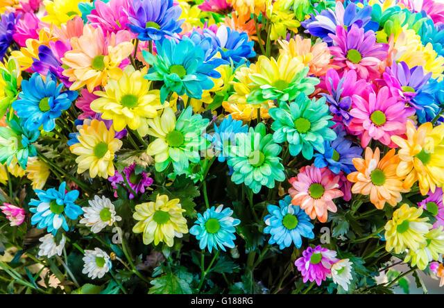 Multi colored flowers stock photos multi colored flowers for How to make multi colored flowers