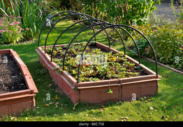 Strawberry Raised Bed Stock Photos Strawberry Raised Bed