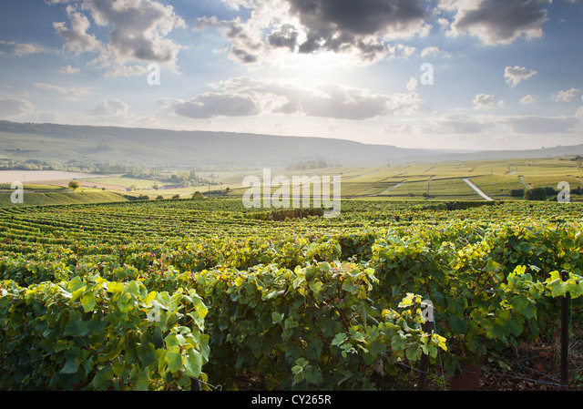 Epernay champagne france stock photos epernay champagne for Champagne region in france