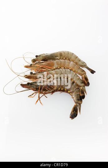 how to cook raw black tiger shrimp