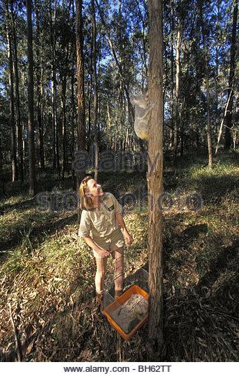 Wild release date in Australia