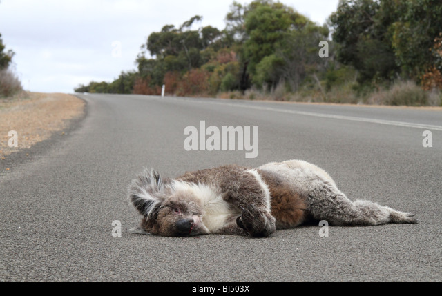 L Clamitans Road Kill Stock Photos...