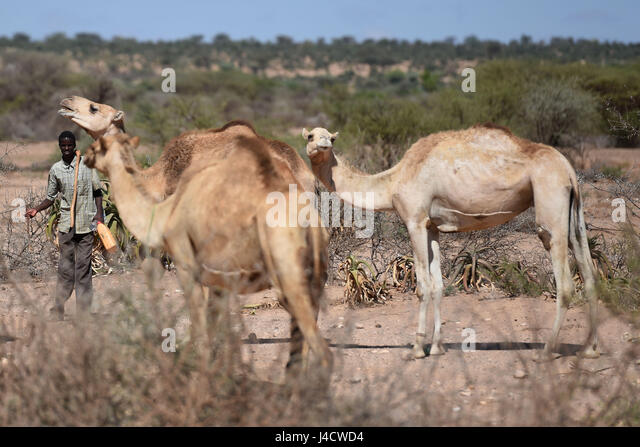 Hargeysa Color Photograph Stock Photos &amp- Hargeysa Color Photograph ...