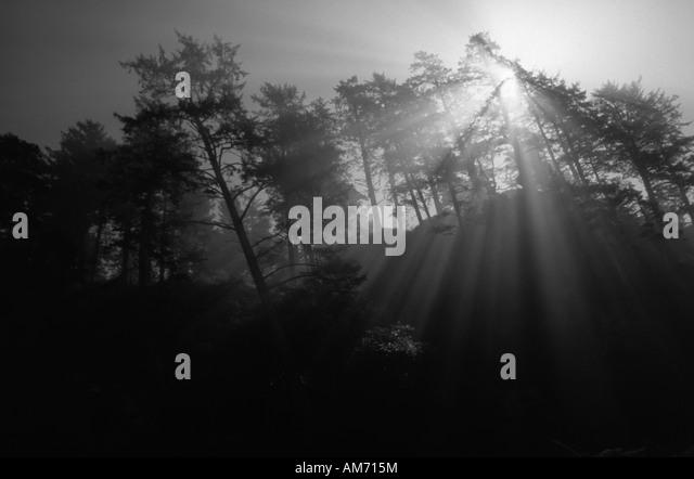 sunlight through trees black - photo #7