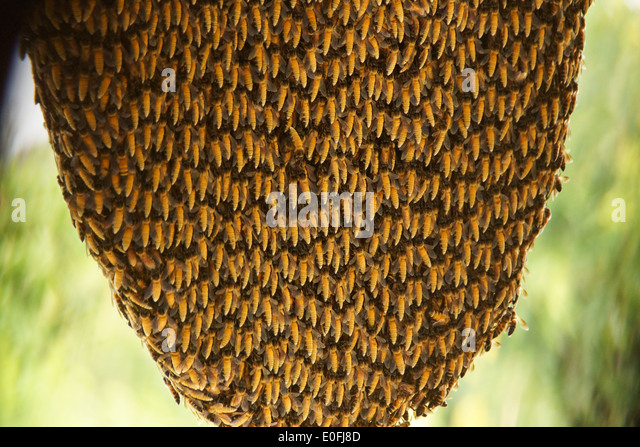 Masonry Bees In Roof Bees Little Monster Pest Control