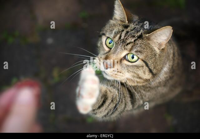 cat fight sounds