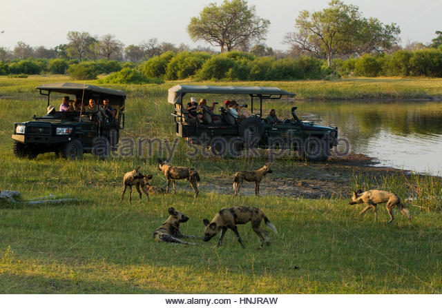 Watching Dogs Stock Photos Watching Dogs Stock Images Alamy