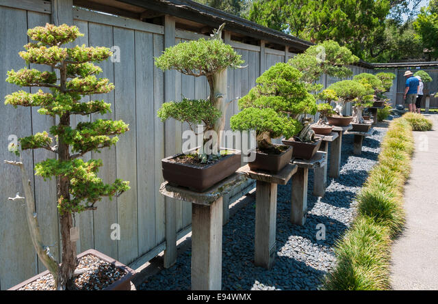 Bonsai Garden Stock Photos Bonsai Garden Stock Images Alamy