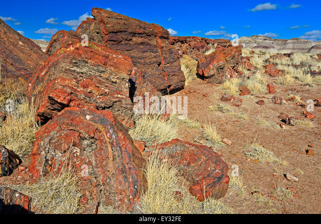 petrified forest natl pk muslim personals Petrified forest national park the colorful rock layers of northeastern arizona's petrified forest national park form an incredible visual display of eroded badlands, dating to the.