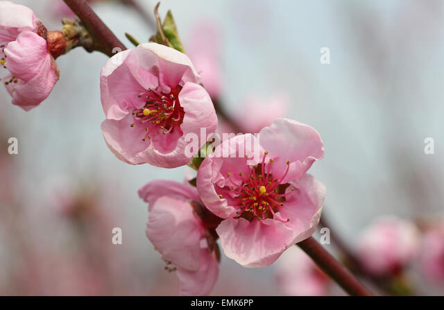 lower peach tree personals Lower peach tree is an unincorporated community in wilcox county, alabama,  united states the community was named for a peach tree which stood near the .