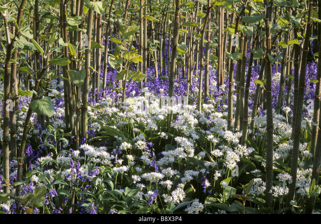 Ravishing Emmetts Stock Photos  Emmetts Stock Images  Page   Alamy With Fetching Bluebells And Wild Garlic In Emmetts Garden Kent  Stock Image With Astounding Plants Vs Zombies Garden Warfare Xbox Also Stowe Garden In Addition How To Stop Cats Coming In Your Garden And Childs Garden Chair As Well As The Night Gardener Additionally Hayes Garden Centre Leeds From Alamycom With   Fetching Emmetts Stock Photos  Emmetts Stock Images  Page   Alamy With Astounding Bluebells And Wild Garlic In Emmetts Garden Kent  Stock Image And Ravishing Plants Vs Zombies Garden Warfare Xbox Also Stowe Garden In Addition How To Stop Cats Coming In Your Garden From Alamycom