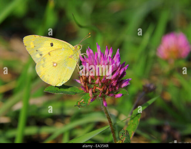 butterfly on yellow color - photo #35
