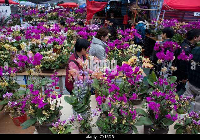 Chinese new year flowers stock photos chinese new year - Flowers for chinese new year ...