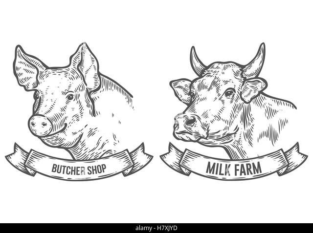 butcher pig illustration stock photos  u0026 butcher pig illustration stock images