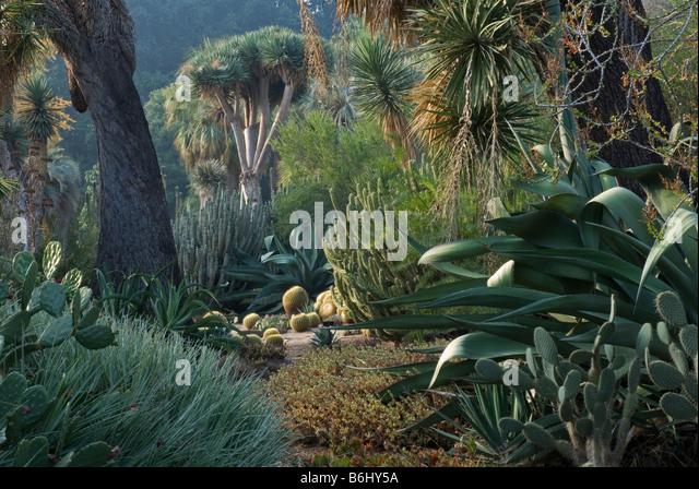 Desert Garden. At The Huntington Botanical Gardens, Santa Monica, USA    Stock Image