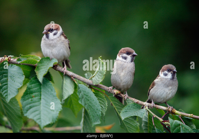 Tips for Choosing the Right Perch, Bird Perches: Variety is ...