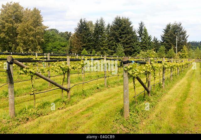 Fraser valley farm stock photos fraser valley farm stock - Planting grapevine in springtime steps ...