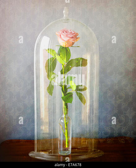 Glass bell jar stock photos glass bell jar stock images for Rose under glass