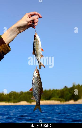 Roach River Stock Photos & Roach River Stock Images