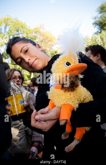 a young woman holds a small dog wearing a baby chick halloween costume stock